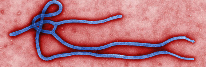 Essential information on Ebola now on Wikipedia
